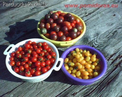 pomidorai erekcijai
